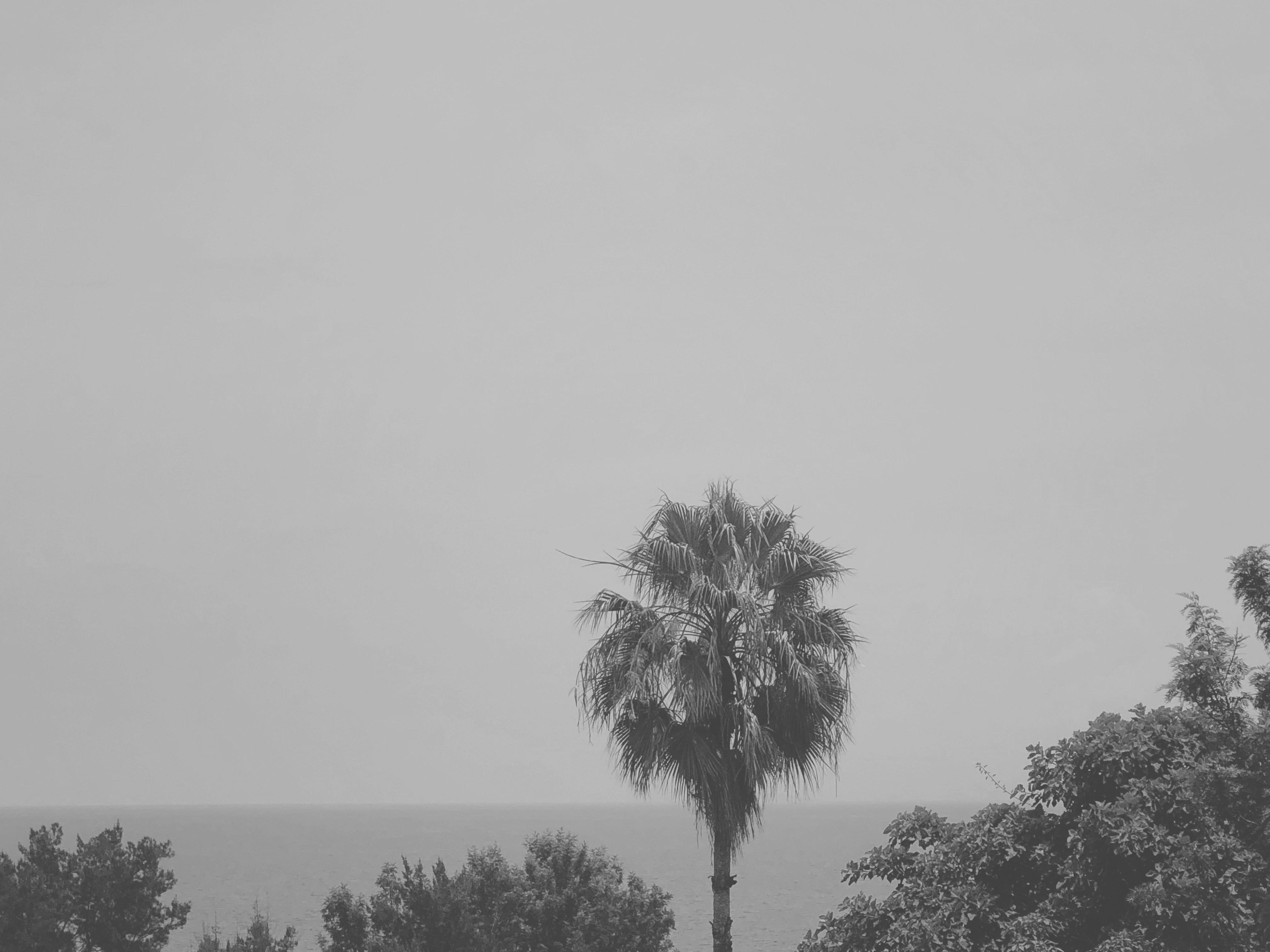 palmù grey