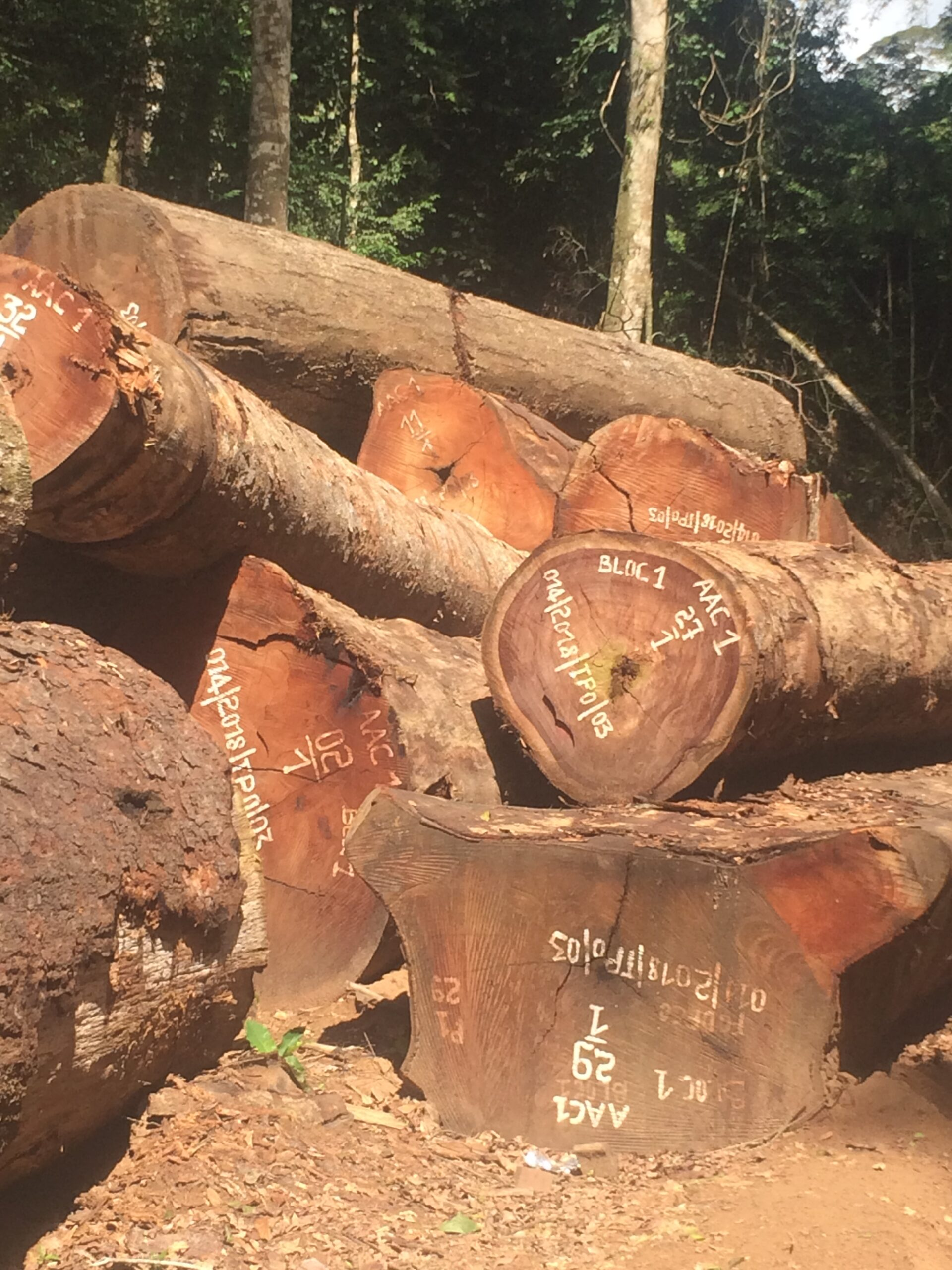 FODECO logs for export