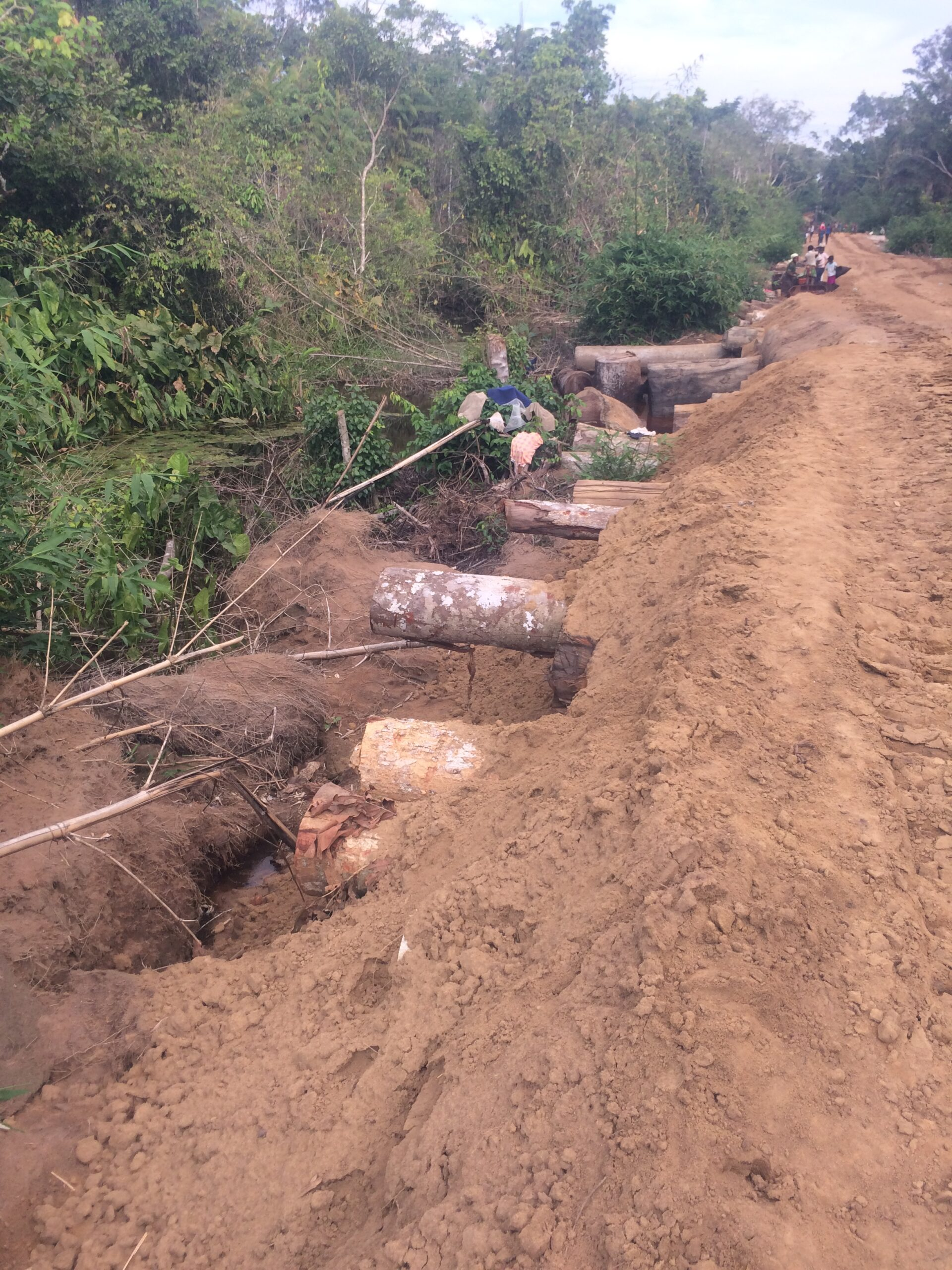 Logging road constructed by FODECO